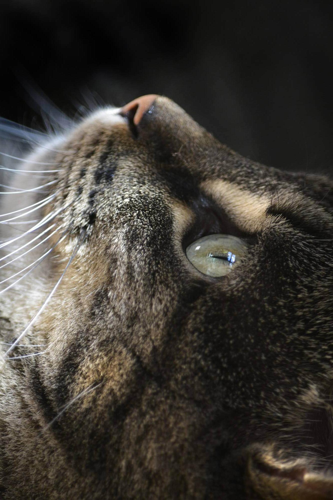 Photograph of Cat close up