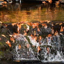 Photograph: Stream at Bushkill Falls