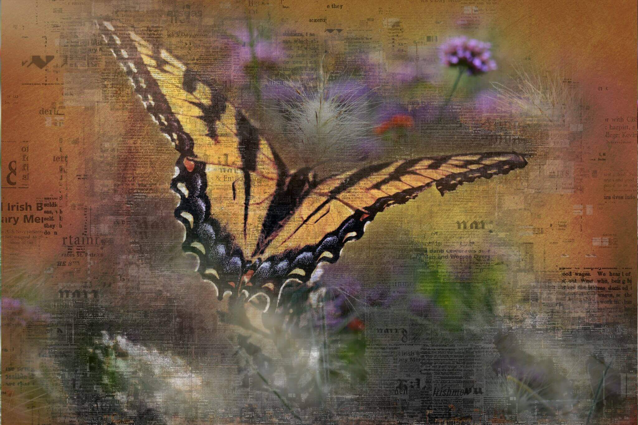digital compostion with butterfly